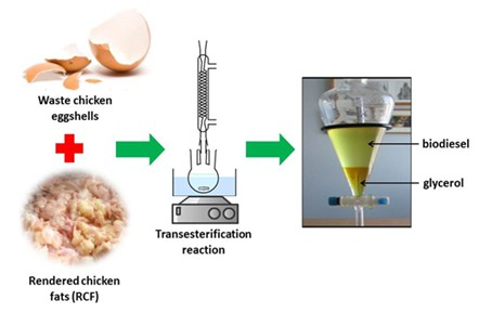Transesterification of rendered chicken fats catalyzed by waste chicken eggshells for biodiesel production