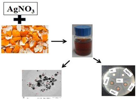 Green synthesis of silver nanoparticles from Citrus sinensis peel extract and its antibacterial potential