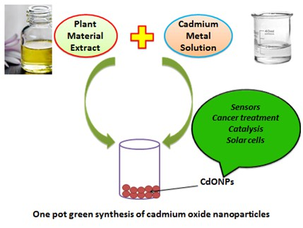 A review on plant extract mediated biogenic synthesis of CdO nanoparticles and their recent applications