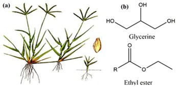 Phytochemical studies of Cynodon dactylon (L.) and isolation and characterization of bis(2-ethylheptyl) phthalate from the plant