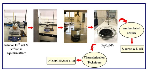 In vitro evaluation of its antimicrobial effect of the synthesized Fe3O4 nanoparticles using Persea Americana extract as a green approach on two standard strains
