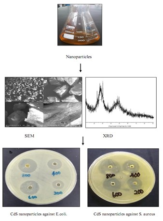 Green synthesis and antibacterial activity of cadmium sulfide nanoparticles (CdSNPs) using Panicum sarmentosum