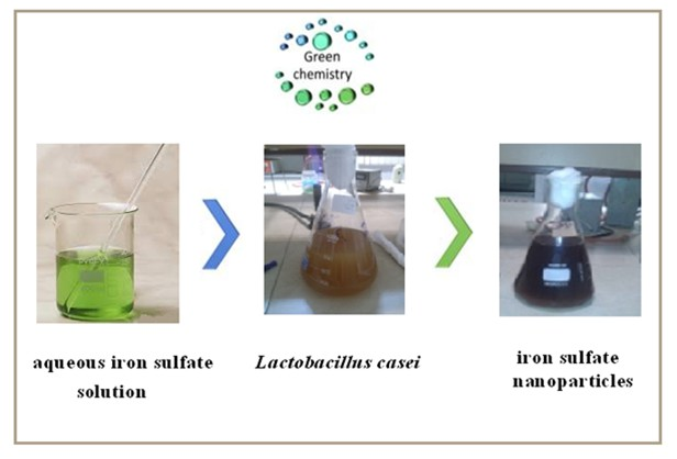 Biosynthesis of iron oxide nanoparticles by cytoplasmic extracts of bacteria lactobacillus casei